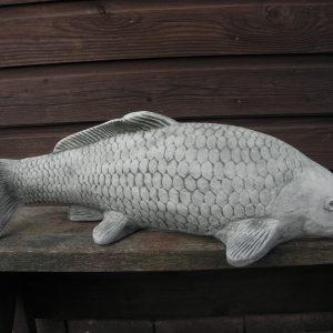 Koi vis groot