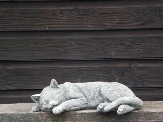 kat liggend 2