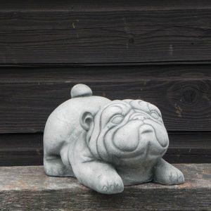 mopshond grijs